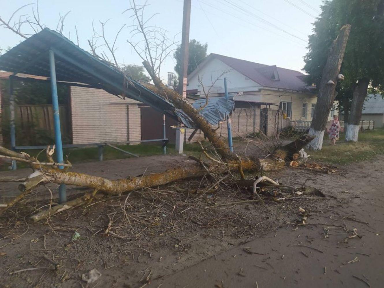 На Сумщині дерево впало на автобусну зупинку (фотофакт)