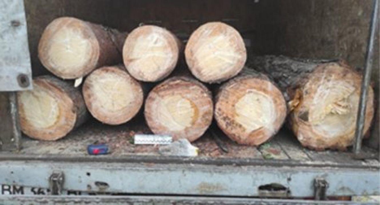 На Сумщині в національному парку зловили нелегального лісоруба